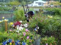 jardin cassine chaix 2